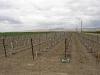 new-vineyard