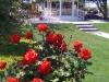 rose-gazebo